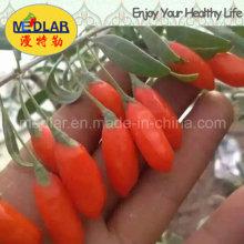 Mispel Bio Goji Chinesische Wolfberry