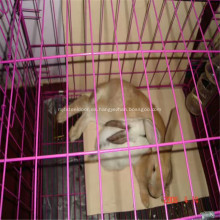 Conejo de malla de alambre / jaula de metal de pollo
