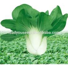MPK03 Qiula frühe reife hybrid pakchoi samen zum pflanzen