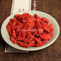 Agriculture Alimentation Goji Berry