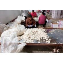 2016 Crop Chenlic Дистрибьютор / Экспортер в Китае