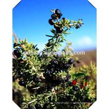 Китайский травяной Медицина черные ягоды Годжи ,черный Плодоовощ wolfberry экстракт
