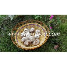 Corte de haste de qualidade superior seco grande branco flor cogumelo Shiitake