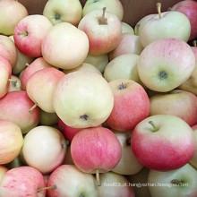 Nova colheita desembaraçada Gala Apple