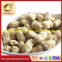 Raw Peanut in Shell Groundnut 11/13