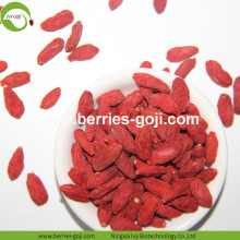 Venta al por mayor Super Food Improve Eyesight Malasia Goji Berry