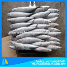 supplier of best frozen fresh mackerel