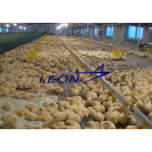 leon Complete automatic pan feeding for poultry equipments