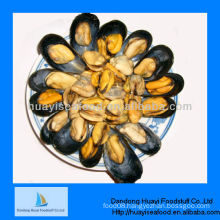 shelled mussels supplier