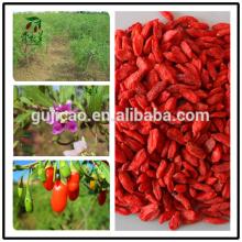 new crop Goji Wolfberry fruit Goji Berry Ningxia Goji Chinese herb medicine wolfberry