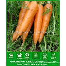 JCA02 forme uniforme graines de carotte de cinq pouces, prix des graines de carotte