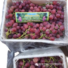 Hot Sell Fresh Sweet Chinese Red Grapes Chinese red globe grapes