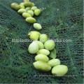 урожай защитная сетка для упаковки оливкового или фруктами