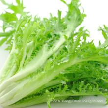 fresh leaf lettuce endive fresh vegetables
