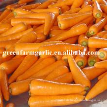2016 neue Ernte frische Karottensamen Preis