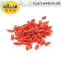 ISO 9001 Dry Fruit - Goji Berry