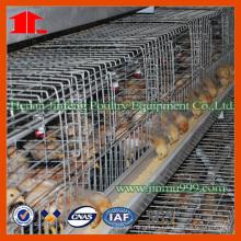 Jinfeng Farm Equipment for Feeding Chicks