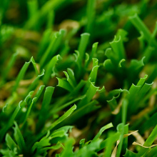 tapis d'herbe artificielle pour le paysage de jardin