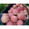 chinese top fresh fuji apple