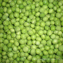 High quality frozen green peas
