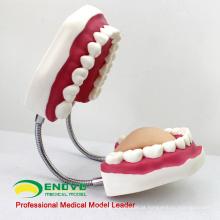 VENDER 12562 Oversized 6x Life Size Tooth Brushing
