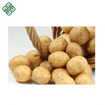 Patata fresca originada en la exportación de New Corps