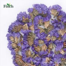 Finch Nueva llegada té de hierbas de la desintoxicación nomeolvides bolsa de té de flores secas
