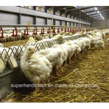 Équipement automatique de volaille pour l'éleveur