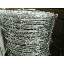 Electro and Hot Dipped Hot Dipped Barbe Wire (specialized manufacturer)