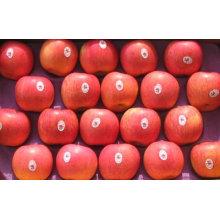 Export frische rote köstliche Apfel Frucht frischen Apfel