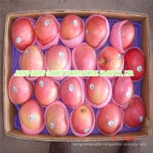 Qingguan Apple