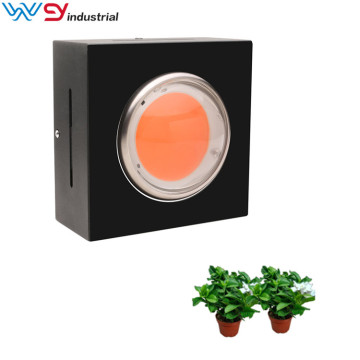 Cob Greenhouse indoor full spectrum grow light