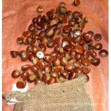 Cheastnut/Fresh chestnut/ Cheastnut wholesale