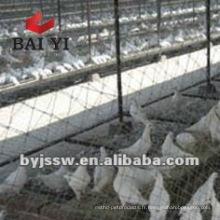 Cage d'élevage de pigeons