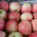 New Crop Fresh Sweet Red Gala Apple