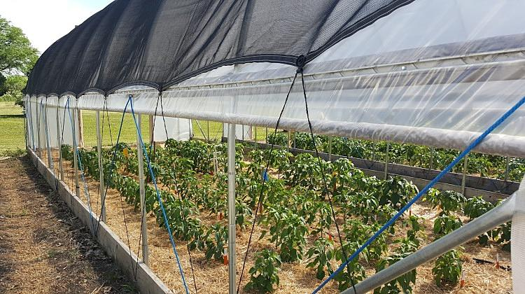 Shade-Cloth-For-Greenhouse