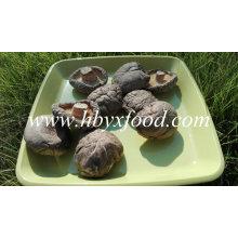 Champignons Shiitake séchés entiers de légumes biologiques en vrac