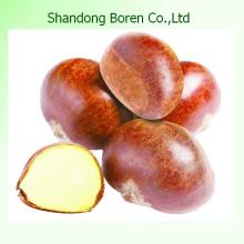 Castaño chino Castaño de Shandong Castaño fresco