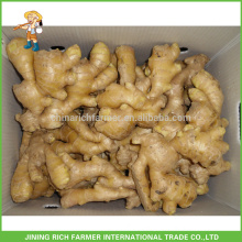 Low Market Price for Export Fresh Ginger Chinese Ginger in China 150g, 250g and up