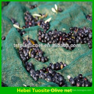 урожай оливковое сеть