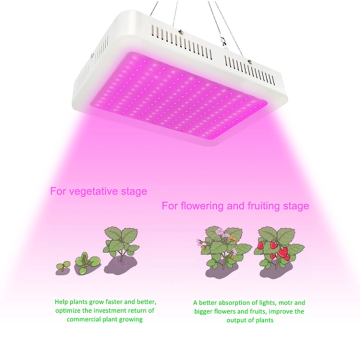 Piante da appartamento Veg & Flower 1000W Greenhouse Led Grow Light