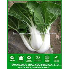 NCC01 Xuema OP calidad semillas de col china, semillas de baicai