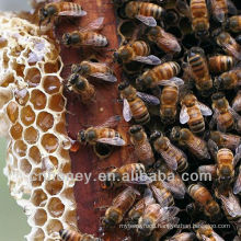 wild longan blossom honey
