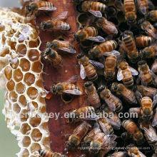 Дикий длинноцветный мед