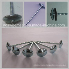 Bwg8 2.5′′ Twisted Shank Umbrella Head (ISO9001)