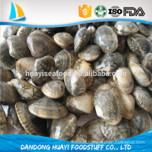 sales promotion 2016 new catching fresh short necked clam with shell