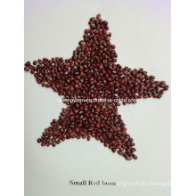Chinese Red Bean