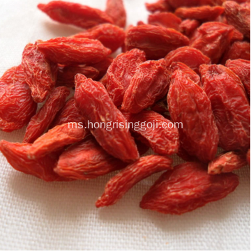 Goji Berry Konvensional