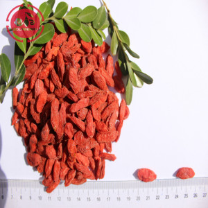 Superfood Protect Eyesight Bajo pesticida Goji Berries