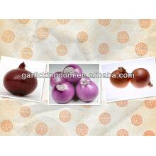 Verkaufen 2013 neue Ernte rote Zwiebel